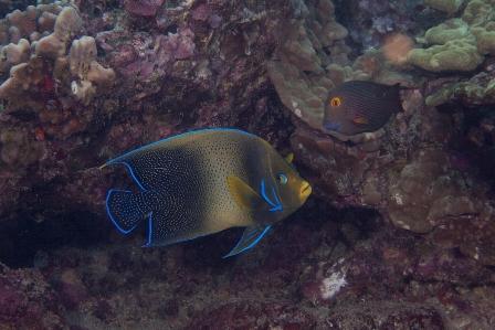 Exotic Fish Sighted At Hanauma Bay